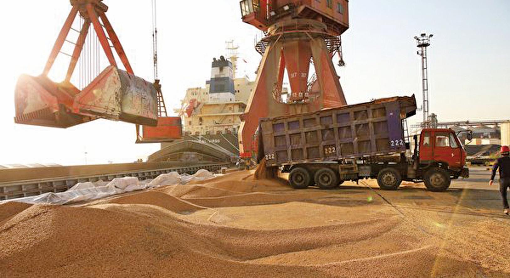7月30日中美貿易代表會談前兩天(7月28日),中共官媒表示中方已經進口了數百萬噸美國大豆。(Getty Images)