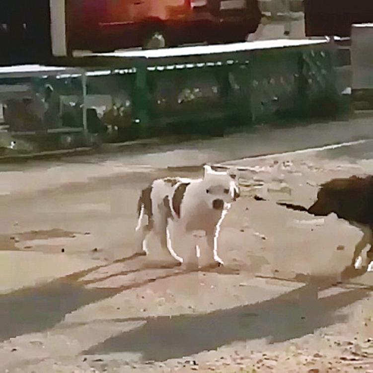 黑色流浪犬成功牽走家犬。(natasha_nvrs Instragram)