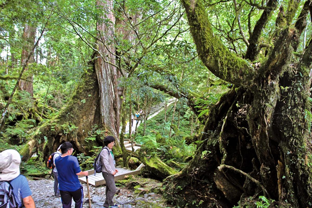 森林療癒,經導覧解說以身體的六感與森林大自然對話。