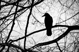 雜論人間的烏鴉