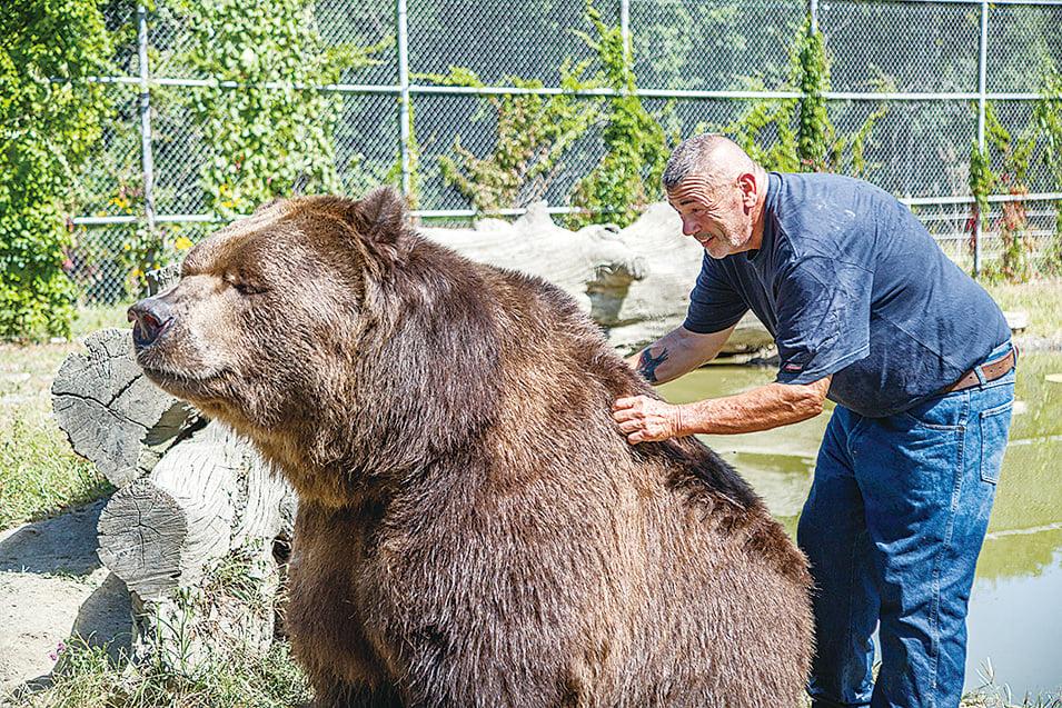 科迪亞克棕熊孤兒Jimbo,2016年在紐約州的孤兒野生動物中心「享受」工作人員為牠抓癢。(Courtesy of James Smith)