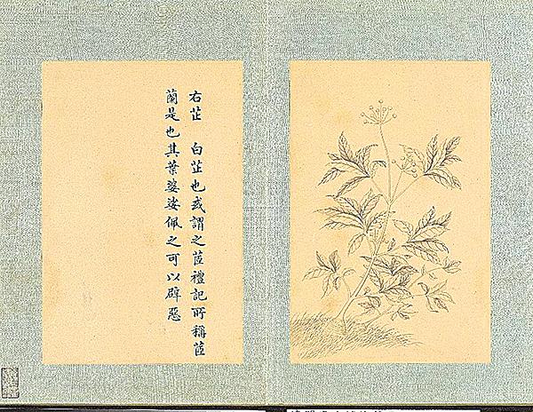 清‧門應兆補繪 蕭雲從《離騷圖下冊‧白芷》(公有領域)