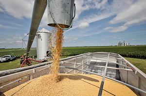 解美豆農燃眉之急 神秘買家購進美國大豆