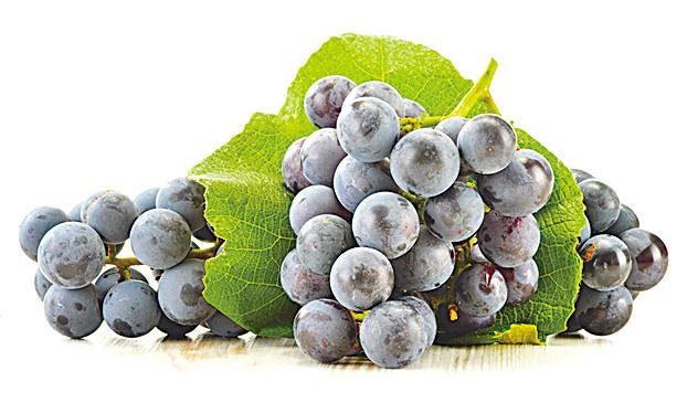 葡萄營養豐富,其總抗氧化力在水果中獨佔鰲頭。