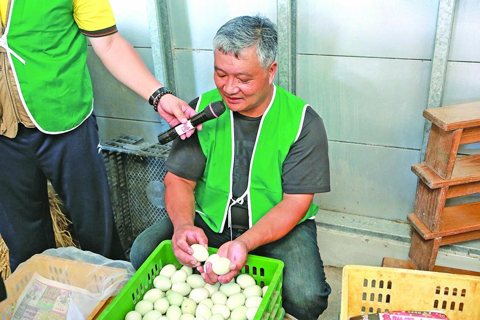 皮蛋是用鹼性物質包覆製作而成。圖為信仁牧場場長教民眾辨識可以作成皮蛋的蛋。