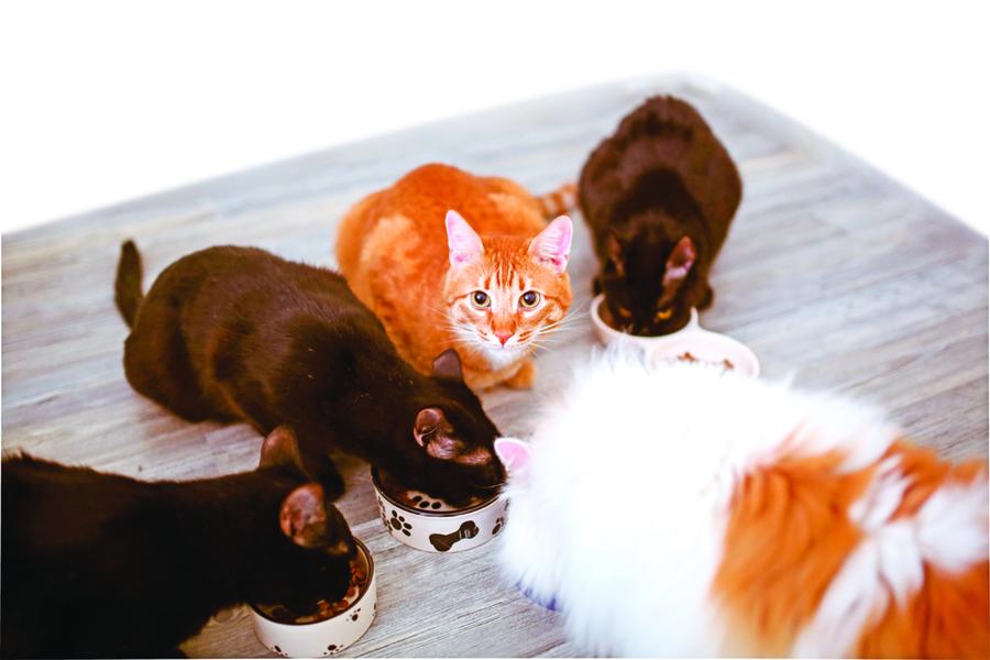 【浮生行吟】五貓圖