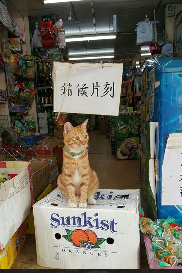 彭啤認為,城市速寫最大的樂趣便是與街坊互動,老闆娘津津樂道分享「貓店長」守店的趣味故事。(受訪者提供)