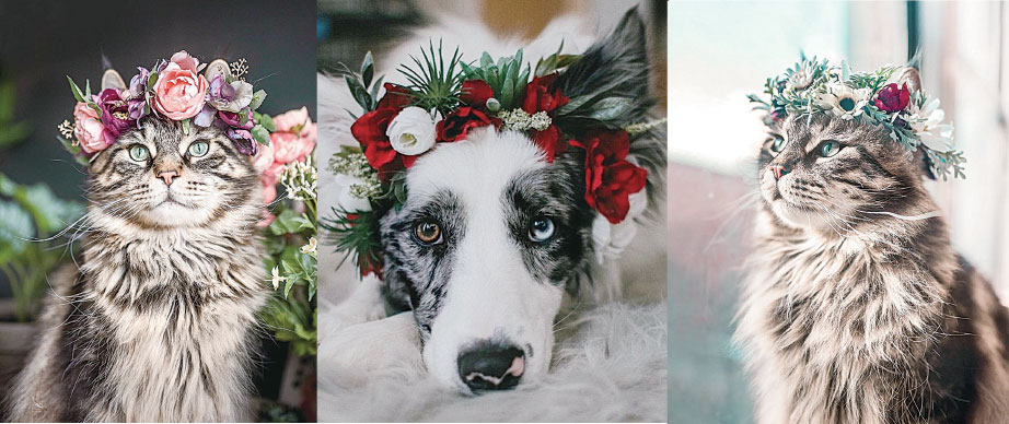 貓貓狗狗頭戴花冠 華貴模樣令人驚艷