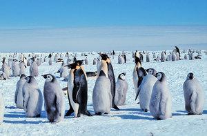 新西蘭發現史前巨型企鵝