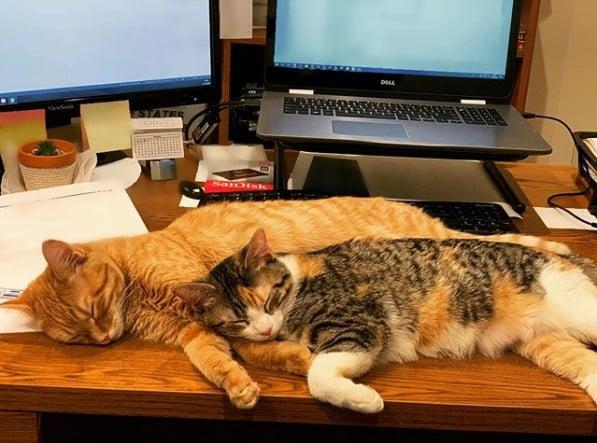 花貓和黃貓分別是「借記」(Debit)和「信用」(Credit),符合了金融業的企業文化精神,瞬間拉近距離,讓兩隻貓咪融入了大家庭。(ourofficekittens Instragram)