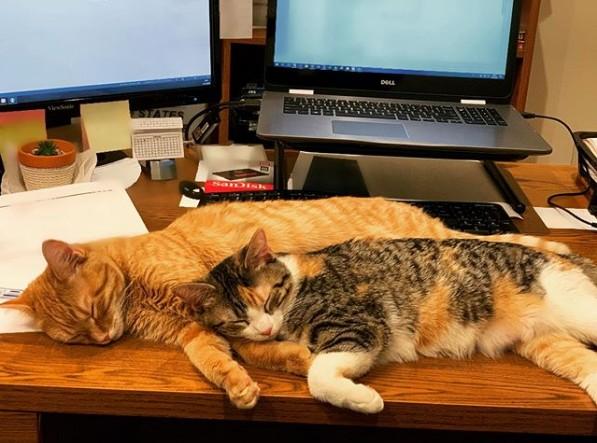 流浪貓入住辦公室  幫員工紓壓成網紅
