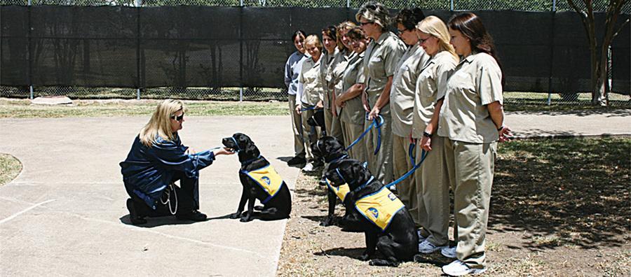 服刑人員照顧被遺棄動物 動物喚愛心 犯人重拾人生熱情