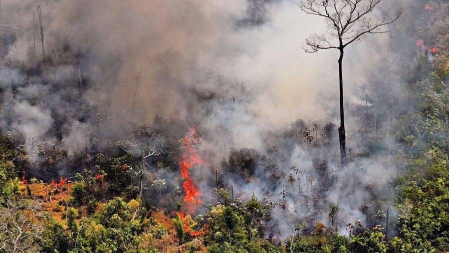 玻利維亞也遭野火蹂躪