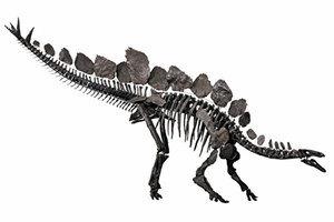 北非發現最古老劍龍化石