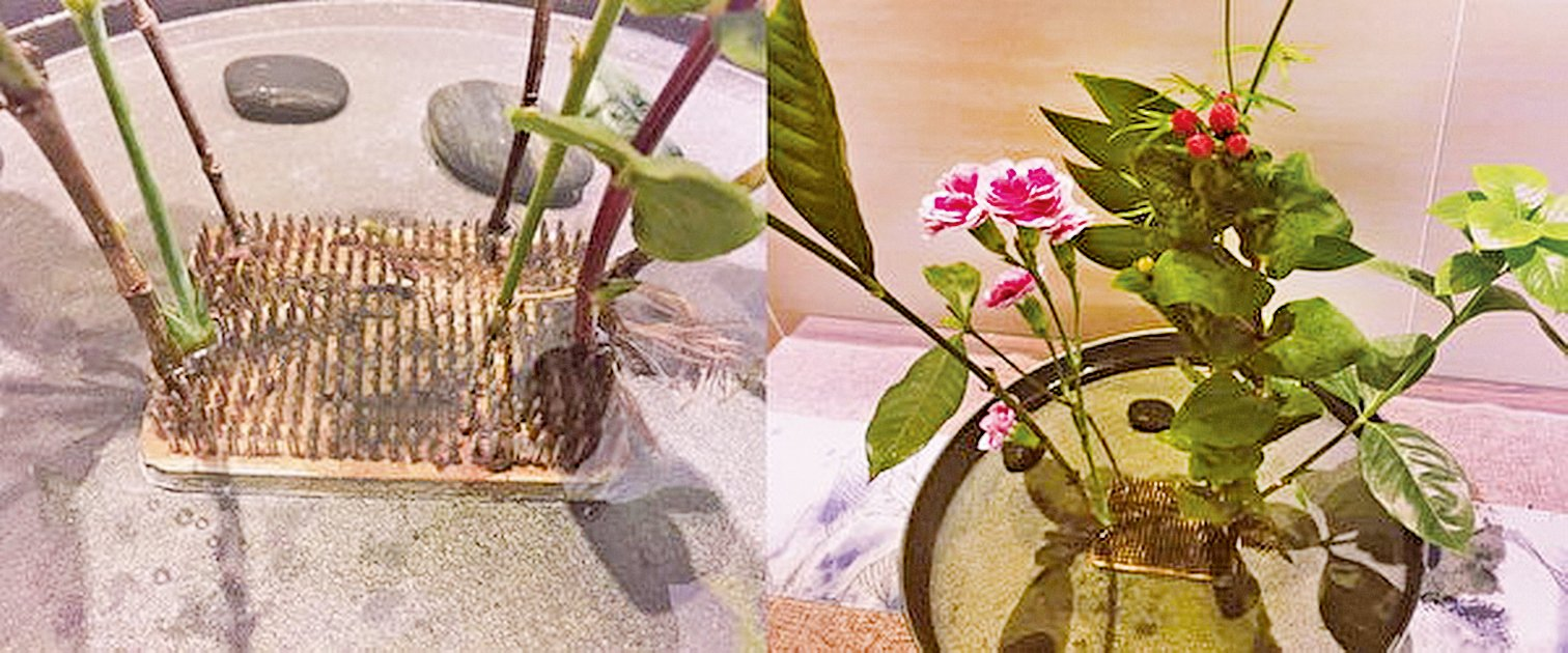 花盆二:根細枝繁盛,葉稠花果香