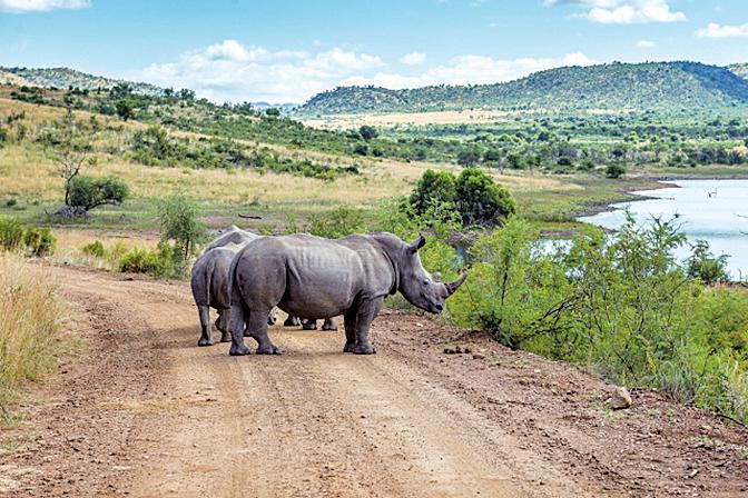 位於南非的匹蘭斯堡國家公園,是南非最大的國家公園。
