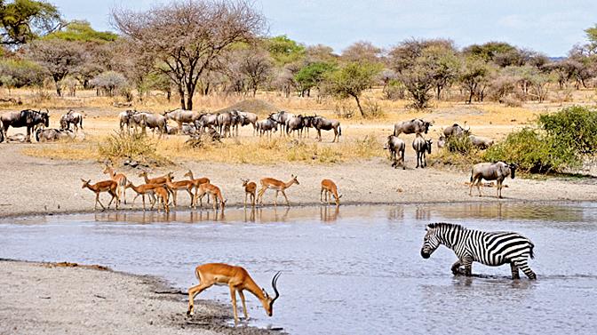 坦桑尼亞的阿魯沙是獵遊必經地。