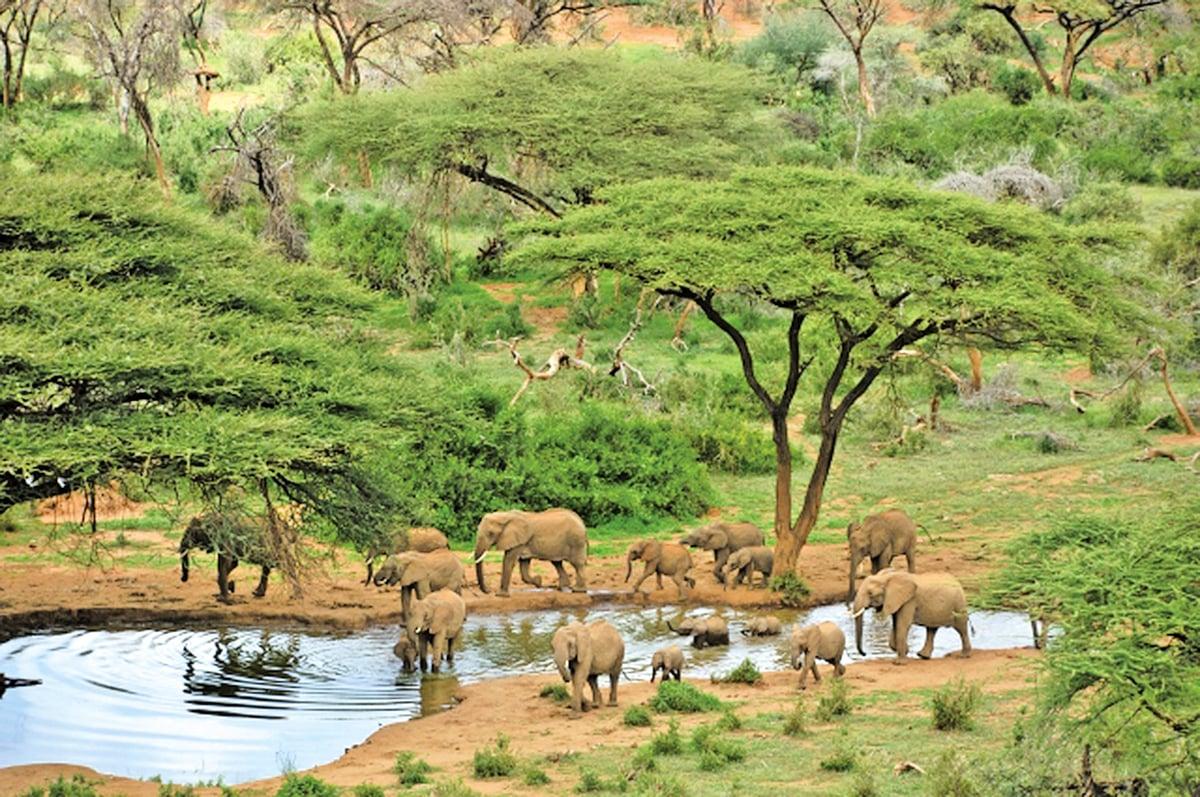 位於肯亞的萊基皮亞是經典動畫場景的靈感來源。
