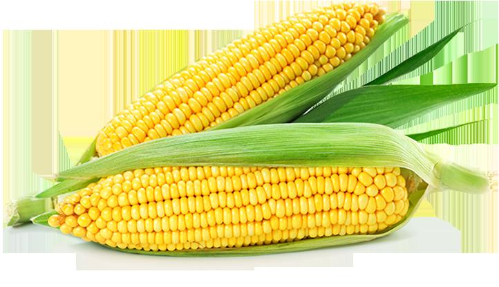 粟米‧椰菜花 有效降低50%白內障風險