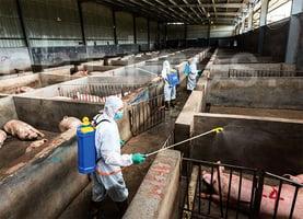 防非洲豬瘟 日本嚴懲遊客帶違規豬肉食品入境