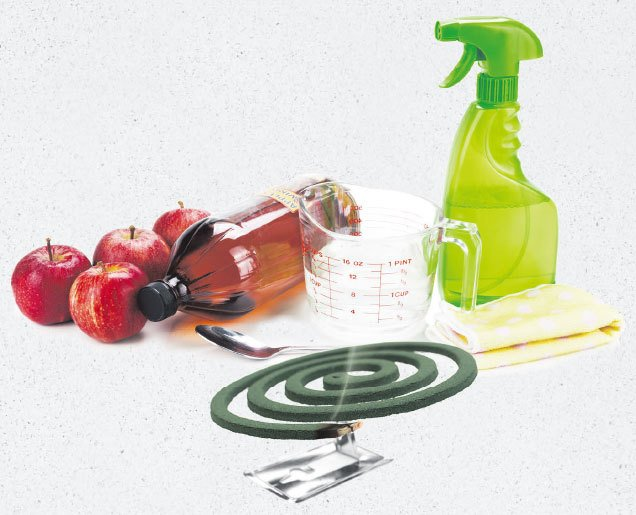 夏日防蚊大作戰  7個有效天然療法