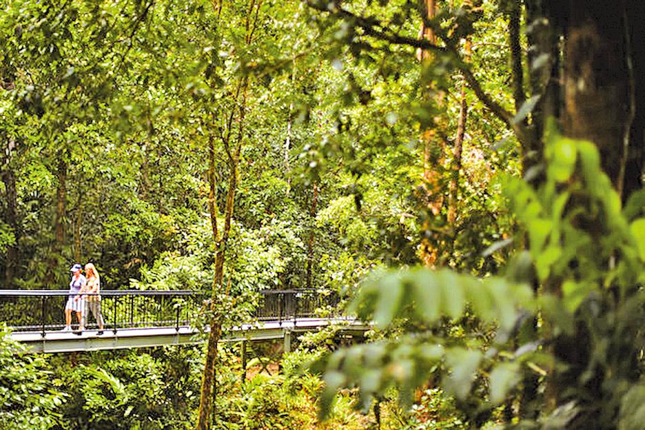 昆士蘭列入世界遺產的原始丹翠雨林。(Mark Kolbe/Getty Images)。