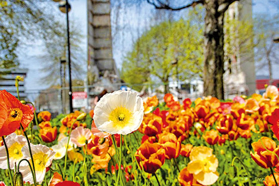紐西蘭春天,到處都可見群花綻放的美景。(Jocelyn Kinghorn/Flickr)