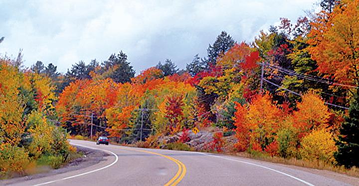 加東最熱門的賞楓路線「楓葉大道」全長約八百公里,沿路楓紅似火,美不勝收。(松林 L/Flickr)