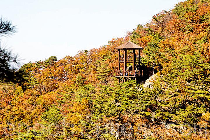 韓國也是秋季賞楓的好去處,圖為韓國京畿道坡州紺岳山楓景。(攝影/全景林)