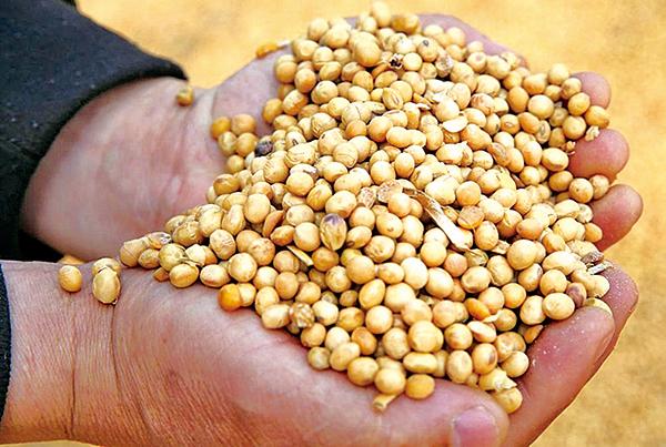 台灣將購買包含大豆在內,價值36億美元的美國農產品。(AFP)