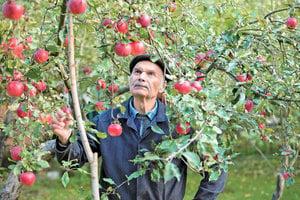 日本老人種出不腐蘋果 引出健康的秘訣