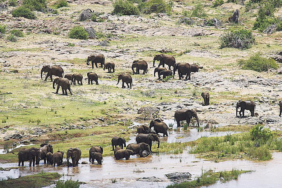 野外的水源處的總有野生動物出現。(Wikimedia commons)