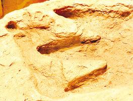 「無神論」被否定之藏在化石岩層中的秘密