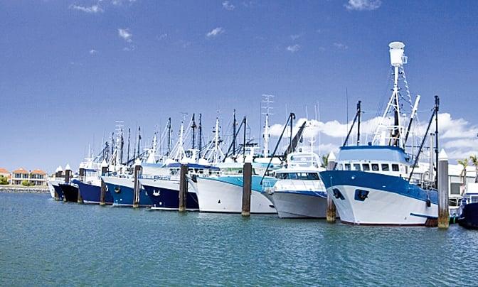澳洲林肯港的「瘋吞拿魚節」,除品嚐產地直送的餐點與世界上最新鮮的海鮮外,並觀賞聞名世界的「吞拿魚投擲競賽」。