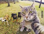 這張貓咪與狗朋友玩自拍的照片在Instagram 網站上熱傳,有超過100萬網民按讚。( 推特網頁擷圖)