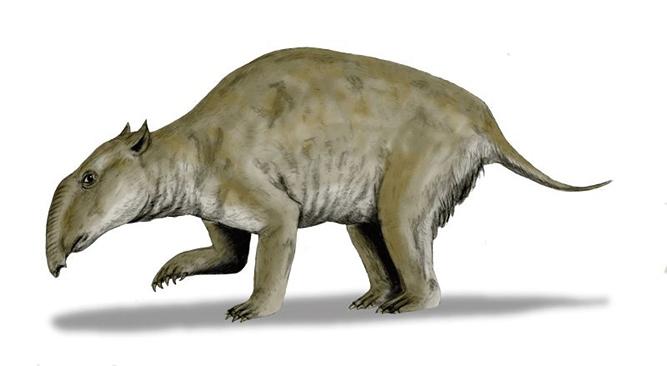 澳洲發現已滅絕巨型袋貘