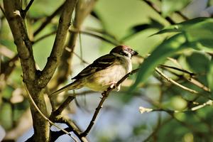 北美洲鳥類50年減少近30億隻