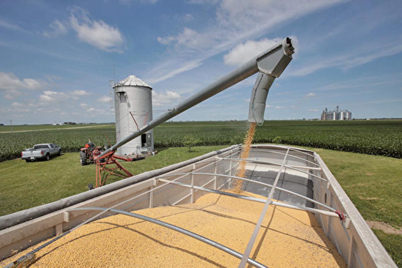 美媒報道稱,北京對進口美國大豆再次發放關稅豁免。(Scott Olson/Getty Images)