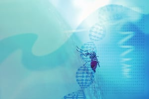 利用轉基因滅蚊實驗帶來難料後
