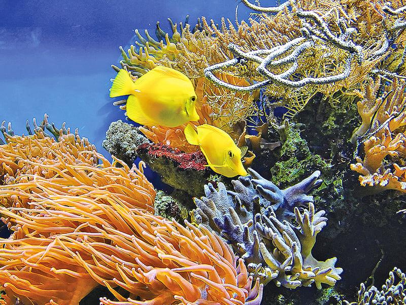 珊瑚與健康