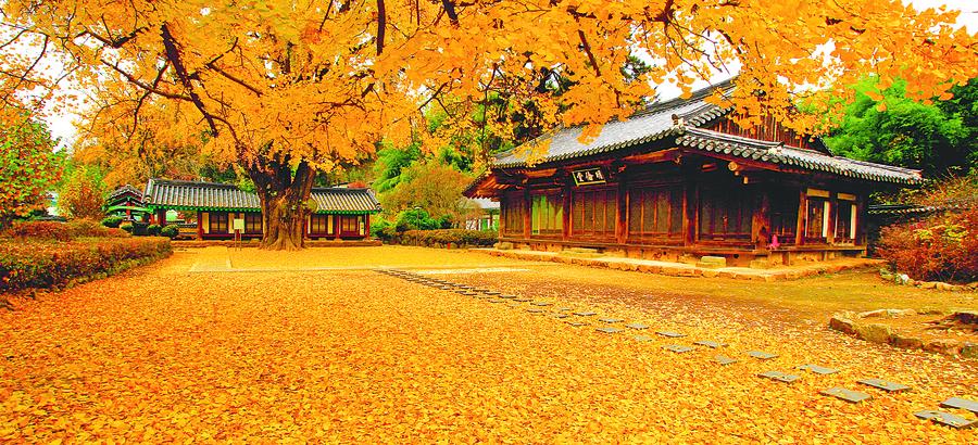 視覺味覺雙饗宴 南韓秋季美食慶典