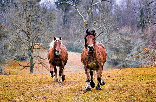 騎馬展射擊之藝也是古人愛好的重陽日活動。圖為奔跑在秋野中的馬。(pixabay)