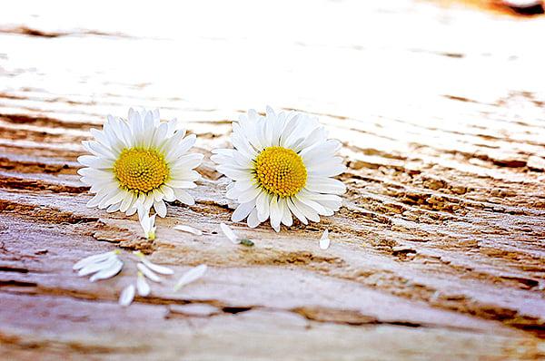 清代過重陽節,登高望山、登高望海,都是天人合一的俗尚,都是颯爽金秋之快事。(pixabay)