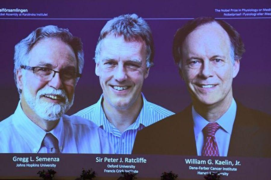 諾貝爾評委會宣佈,獲獎者是美國哈佛醫學院教授凱林(William Kaelin Jr,左)、英國分子生物學家雷克里夫(Peter Ratcliffe,中)和美國約翰霍普金斯的醫學教授塞門薩(Gregg Semenza,右)(Jonathan NACKSTRAND/AFP)