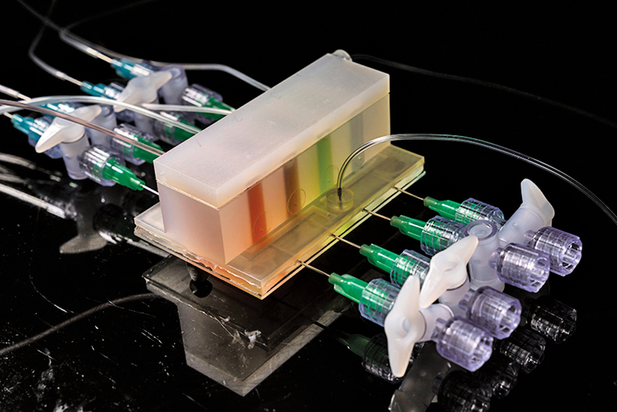 MIT造出人工腸道來研究體內微菌