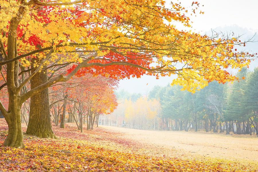 南韓的魅力秋日 秋楓山行