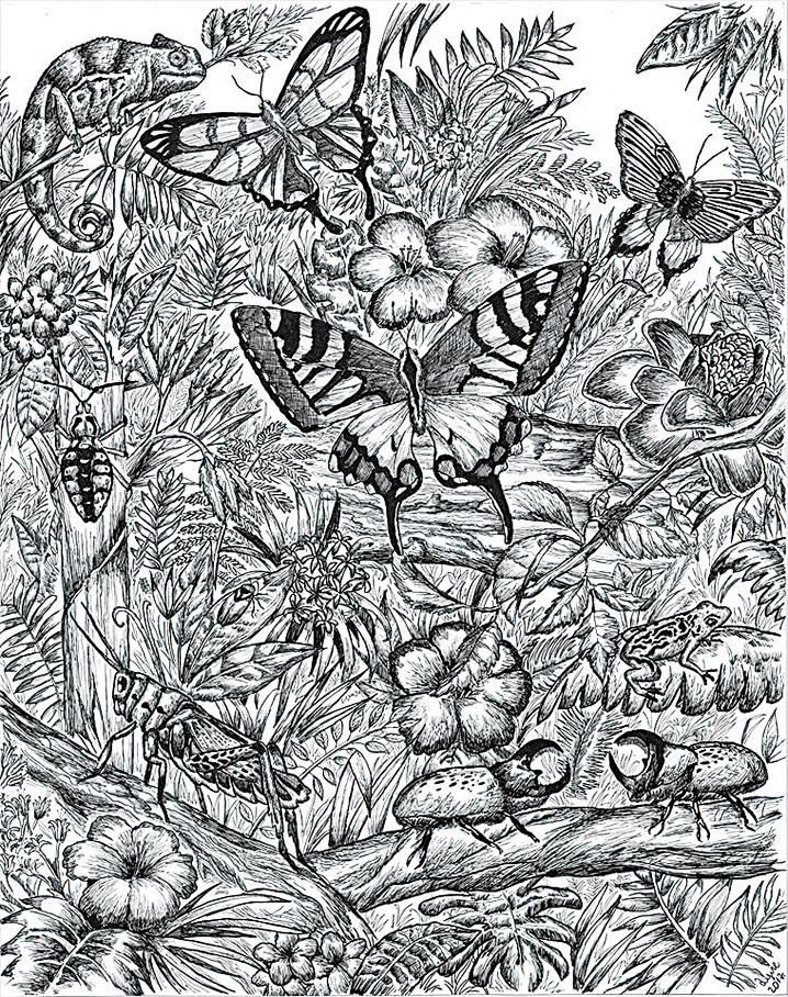 (左圖)杜辛畫的昆蟲也栩栩如生。為了構圖更完美,杜辛還深入研究、探索專業知識,如為各種昆蟲配上相對應的植物群等等,涉及更廣泛的自然生態。(Dušan Krtolica Facebook)