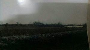 遼寧1,400頭病豬埋田地 兩千村民飲用污水