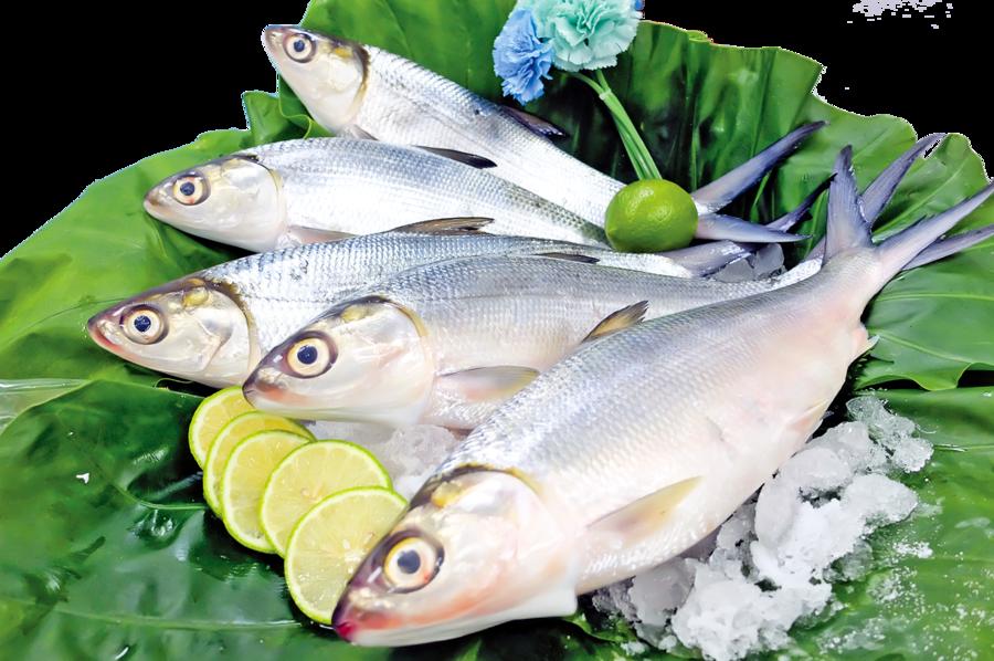 台灣虱目魚美食 外國人也喜愛
