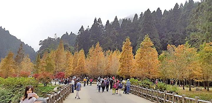 深秋初冬漫步杉林溪森林生態園區賞楓、賞水杉,詩意無限。